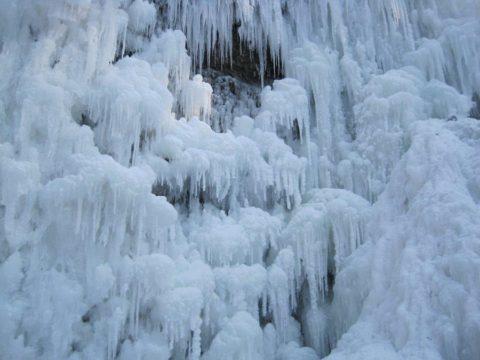 éventail hérisson hiver
